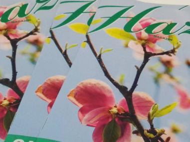HAZ-Magazin Printausgaben